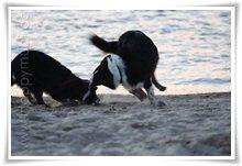 """Bild """"http://www.happymudi.de/allerlei/galerien/FOTOS-Abendstimmung-Rhein-2008/vorschau/IMG2008-02-09_130.jpg"""""""