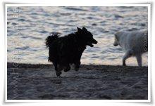 """Bild """"http://www.happymudi.de/allerlei/galerien/FOTOS-Abendstimmung-Rhein-2008/vorschau/IMG2008-02-09_134.jpg"""""""