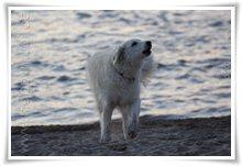 """Bild """"http://www.happymudi.de/allerlei/galerien/FOTOS-Abendstimmung-Rhein-2008/vorschau/IMG2008-02-09_137.jpg"""""""