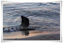 """Bild """"http://www.happymudi.de/allerlei/galerien/FOTOS-Abendstimmung-Rhein-2008/vorschau/IMG2008-02-09_145.jpg"""""""