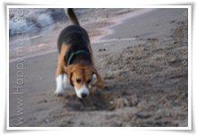 """Bild """"http://www.happymudi.de/allerlei/galerien/FOTOS-Abendstimmung-Rhein-2008/vorschau/IMG2008-02-09_155.jpg"""""""