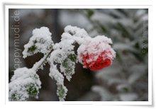 "Bild ""http://www.happymudi.de/allerlei/galerien/FOTOS-Ratingen-Schnee-2007/vorschau/Schnee_IMG2007-12-20_014.jpg"""