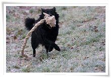 "Bild ""http://www.happymudi.de/allerlei/galerien/FOTOS-Ratingen-Schnee-2007/vorschau/Schnee_IMG2007-12-20_055.jpg"""