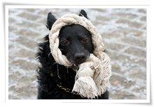 "Bild ""http://www.happymudi.de/allerlei/galerien/FOTOS-Ratingen-Schnee-2007/vorschau/Schnee_IMG2007-12-20_121.jpg"""