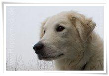 "Bild ""http://www.happymudi.de/allerlei/galerien/FOTOS-Ratingen-Schnee-2007/vorschau/Schnee_IMG2007-12-20_135.jpg"""