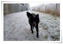 "Bild ""http://www.happymudi.de/allerlei/galerien/FOTOS-Ratingen-Schnee-2007/vorschau/Schnee_IMG2007-12-20_142.jpg"""
