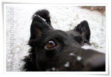 "Bild ""http://www.happymudi.de/allerlei/galerien/FOTOS-Ratingen-Schnee-2007/vorschau/Schnee_IMG2007-12-20_143.jpg"""