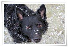 "Bild ""http://www.happymudi.de/allerlei/galerien/FOTOS-Ratingen-Schnee-2007/vorschau/Schnee_IMG2007-12-20_149.jpg"""