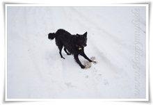 "Bild ""http://www.happymudi.de/allerlei/galerien/FOTOS-Schneespaziergang-Sarah-Moppel-Jan2009/vorschau/IMG2009-01-05_062.JPG"""