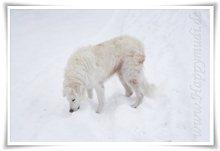 "Bild ""http://www.happymudi.de/allerlei/galerien/FOTOS-Schneespaziergang-Sarah-Moppel-Jan2009/vorschau/IMG2009-01-05_064.JPG"""