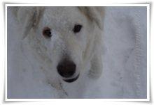 "Bild ""http://www.happymudi.de/allerlei/galerien/FOTOS-Schneespaziergang-Sarah-Moppel-Jan2009/vorschau/IMG2009-01-05_090.JPG"""