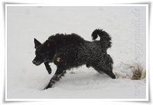 "Bild ""http://www.happymudi.de/allerlei/galerien/FOTOS-Schneespaziergang-Sarah-Moppel-Jan2009/vorschau/IMG2009-01-05_098_Moppel.jpg"""