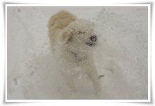 "Bild ""http://www.happymudi.de/allerlei/galerien/FOTOS-Schneespaziergang-Sarah-Moppel-Jan2009/vorschau/IMG2009-01-05_109_Sarah.jpg"""