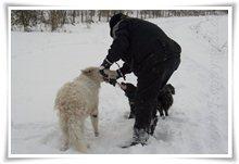 "Bild ""http://www.happymudi.de/allerlei/galerien/FOTOS-Schneespaziergang-Sarah-Moppel-Jan2009/vorschau/IMG2009-01-05_125_Rangeln.jpg"""
