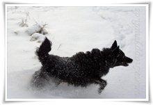 "Bild ""http://www.happymudi.de/allerlei/galerien/FOTOS-Schneespaziergang-Sarah-Moppel-Jan2009/vorschau/IMG2009-01-05_133_Moppel.jpg"""