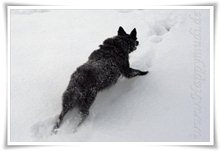 "Bild ""http://www.happymudi.de/allerlei/galerien/FOTOS-Schneespaziergang-Sarah-Moppel-Jan2009/vorschau/IMG2009-01-05_134_Moppel.jpg"""