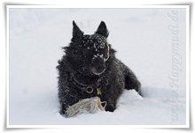 "Bild ""http://www.happymudi.de/allerlei/galerien/FOTOS-Schneespaziergang-Sarah-Moppel-Jan2009/vorschau/IMG2009-01-05_162_Moppel.jpg"""