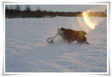 "Bild ""http://www.happymudi.de/allerlei/galerien/FOTOS-Schneespaziergang-Sarah-Moppel-Jan2009/vorschau/IMG2009-01-05_233.JPG"""