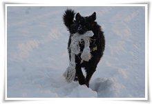 "Bild ""http://www.happymudi.de/allerlei/galerien/FOTOS-Schneespaziergang-Sarah-Moppel-Jan2009/vorschau/IMG2009-01-05_236.JPG"""