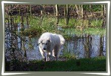"Bild ""http://www.happymudi.de/allerlei/galerien/FOTOS-Spaziergang-in-Feld-Tuempel-2008/vorschau/IMG2008-02-10_028.jpg"""