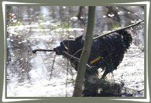 "Bild ""http://www.happymudi.de/allerlei/galerien/FOTOS-Spaziergang-in-Feld-Tuempel-2008/vorschau/IMG2008-02-10_039.jpg"""